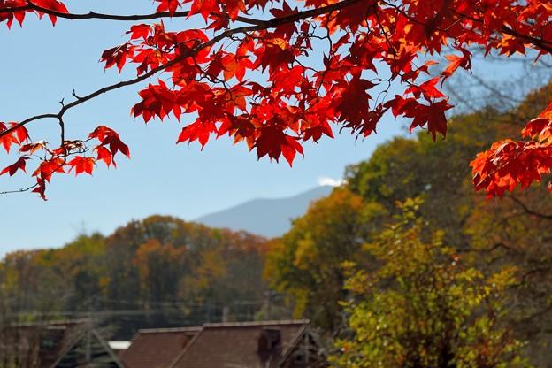 浅間山を望む
