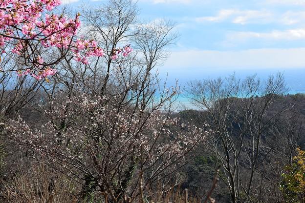 桜、白梅、海