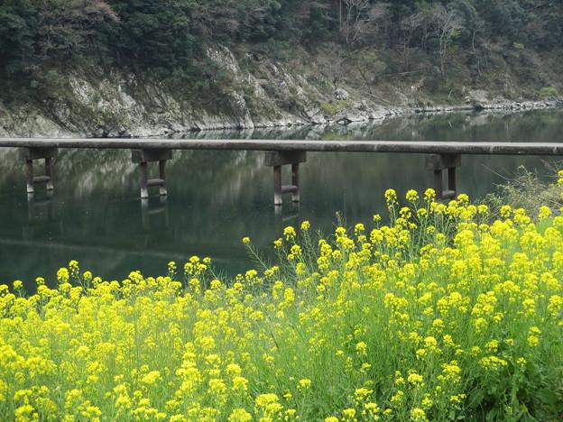 菜の花と沈下橋