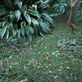 写真: 剪定枝を撒いた庭1