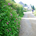The Street with Ornamental Jewelweeds 8-20-14