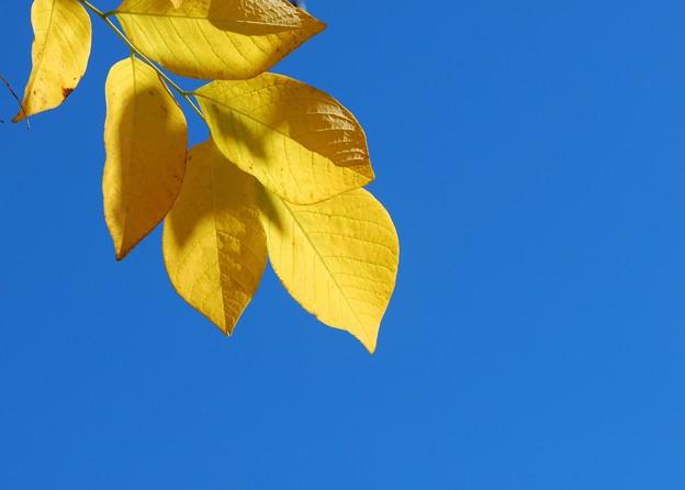 Yellowwood I 10-17-15