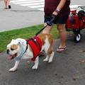 Photos: That Bulldog 8-22-15