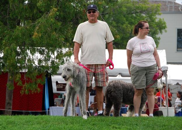 写真: Irish Wolfhound 8-22-15
