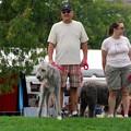 Photos: Irish Wolfhound 8-22-15