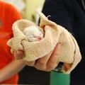 Photos: Kitten Time 9-20-15