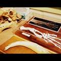 Photos: Bones 2-9-16