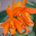 写真: Orchid 2-18-16