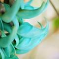 写真: Emerald Vine 3-18-16