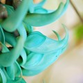 Photos: Emerald Vine 3-18-16