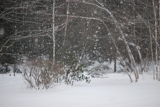 写真: Winter