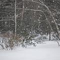 Photos: Winter