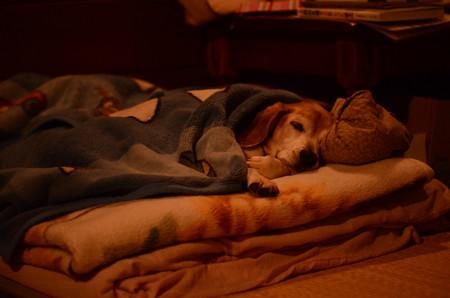 もうトローんとした顔で寝ているマリン