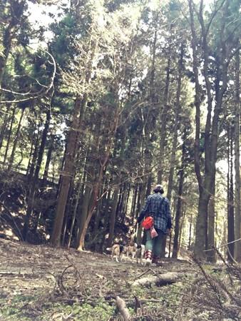 山は森はやっぱり癒されます