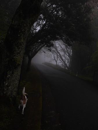 今朝はすごい霧でしたね~