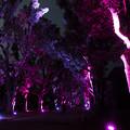 写真: 木々のイルミネーション8