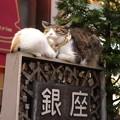 看板の上で寝る猫