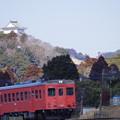 写真: お城とタラコ