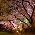 Photos: 品川の桜5