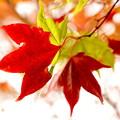 Photos: 紅葉侵食中