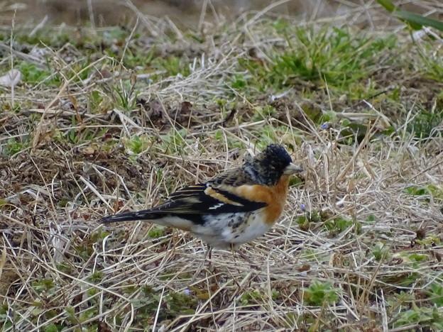 Photos: はぐれ鳥