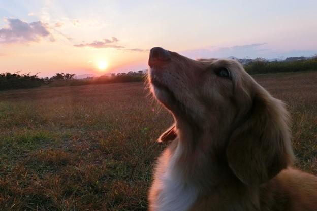 夕日とリモっこ