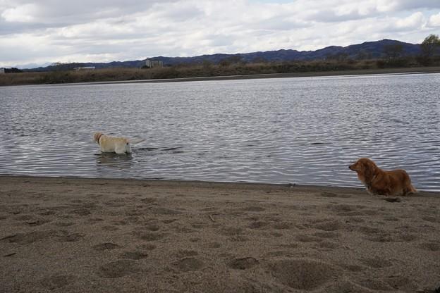 川原で遊ぶ