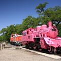 Photos: 青空とピンクのSL