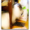 写真: 字を読む猫