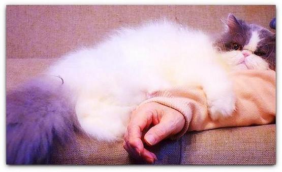 写真: 抱きつく猫