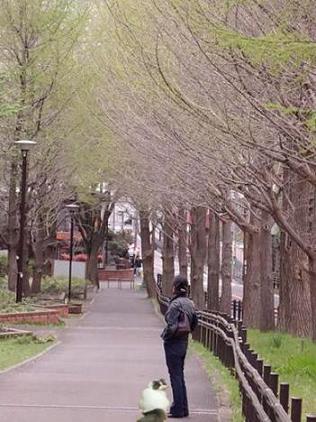 写真: cooとなんちゃって散歩