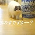 写真: 暇猫
