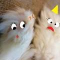 写真: 肉球フェチの飼い主(笑)