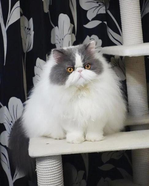 視線を逸らす猫
