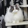 写真: 視線を逸らす猫