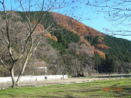 大芦川F&Cフィールドビレッジ
