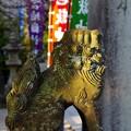 写真: 宮地嶽神社 狛犬