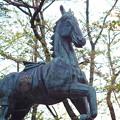 写真: 宮地嶽神社 神馬像