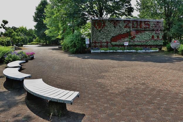 植物園 >>: フラワーウォール IMG_2989