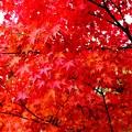 秋彩~紅葉