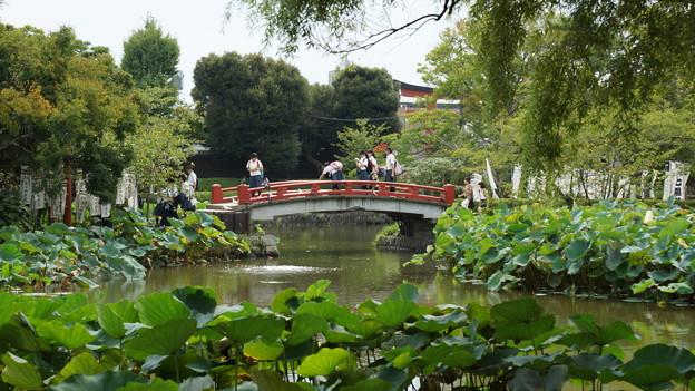 鶴岡八幡 池