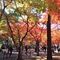 Photos: PC017557s紅葉散策