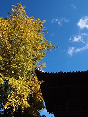 秋空と銀杏