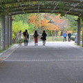 藤のトンネルの向こうは秋色