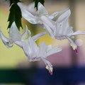 Photos: 花咲く飛来~