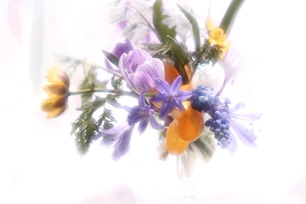Photos: 春の歌声~♭