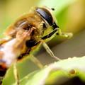 写真: 花粉まみれの働き者