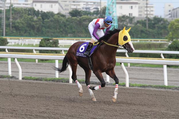 エスワンプリンス 返し馬(14/07/21・第4回 習志野きらっとスプリント)