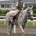 写真: 船橋競馬場 誘導馬_1(14/07/21)