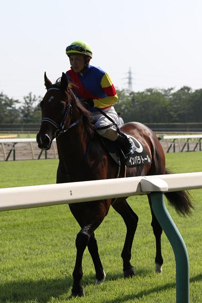 インパラトール 返し馬(阿賀野川特別)